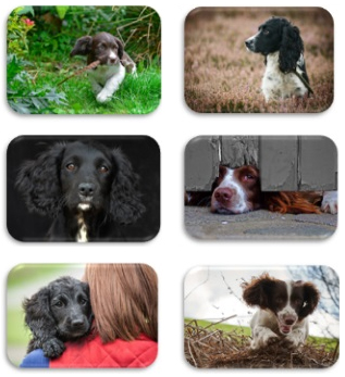 Spaniels Placemats
