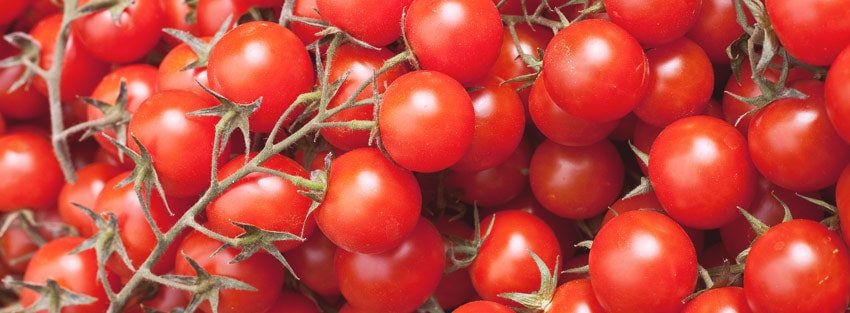 Grow your tomatoes banner