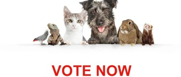 Vote Now to Support your favourite Animal Charity