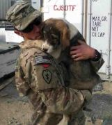 Nowzad soldier-pet-resque-animal-war-18__605 1