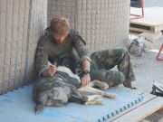 Nowzad soldier-pet-resque-animal-war-18__605 5