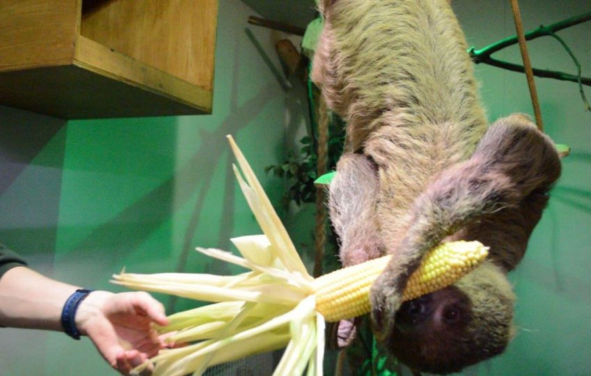 Rainforest & Sloth Experience 6
