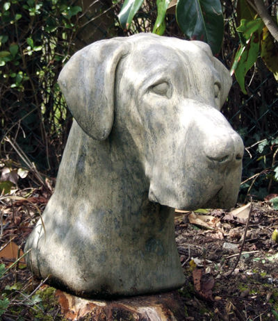Great Dane Head
