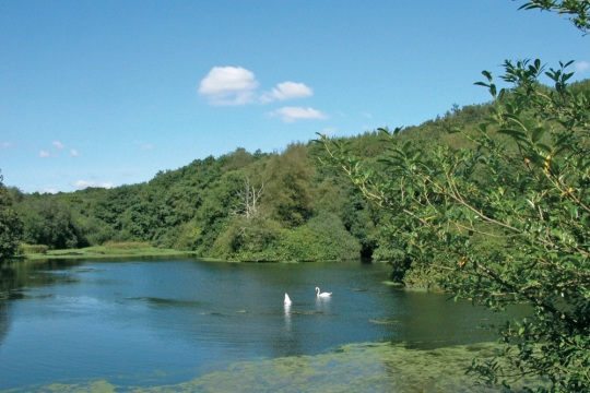 Otterhead Lakes, near Otterford, image taken by John Carter for Visit Somerset
