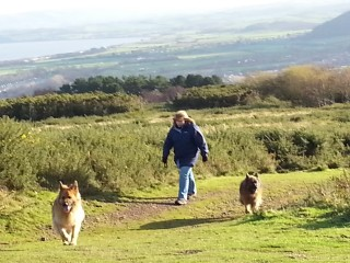 Minehead dog walk