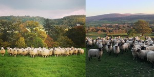 New Exmoor Grass-Fed Lamb Film and Online Directory Encourages People to #BuyLocal