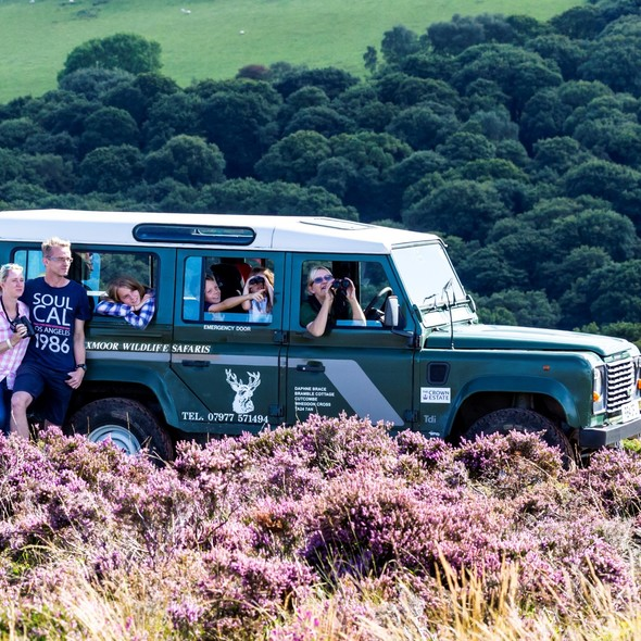 Exmoor Wildlife Safaris