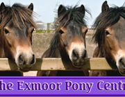 The Exmoor Pony