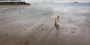 Walkies in Minehead!