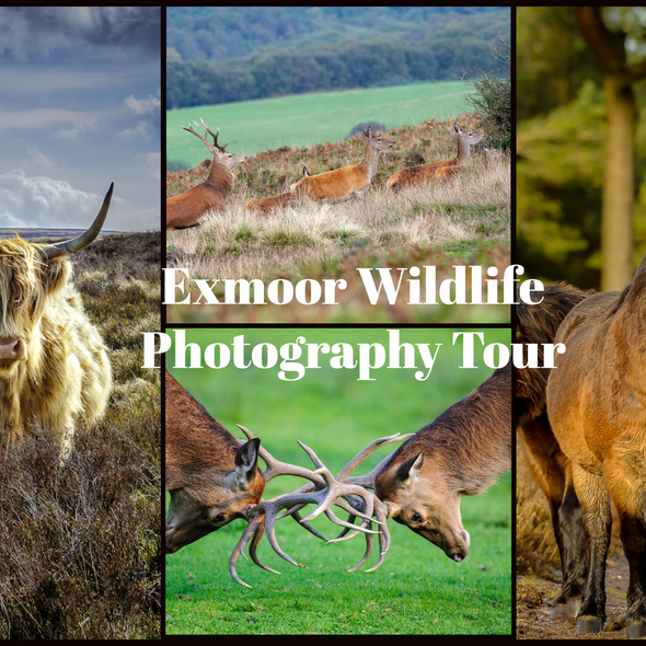 Exmoor Wildlife Tour