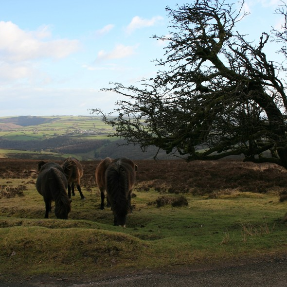 Exmoor Natural History Society