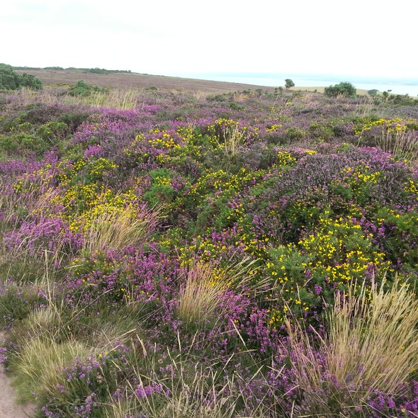 Exmoor Society Guided Walks